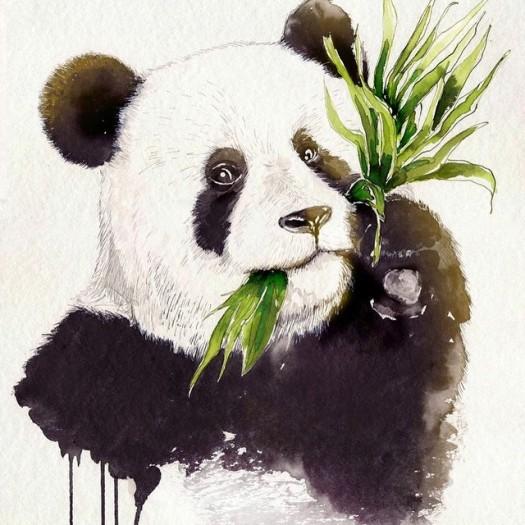 panda-drawing-julia-munich-artists