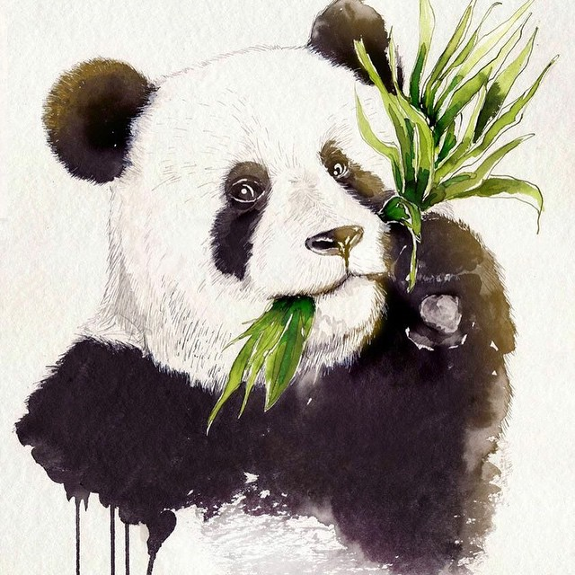 panda-drawing-julia-munich-artists