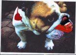Munich artists Brigitte Hoppstock - Dog