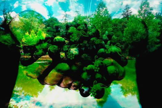 munich artists Sam Malviya - Grapes