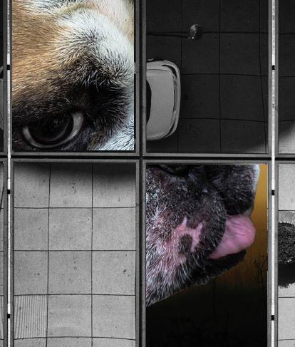 Munich Artists Gabriela Popp - Dog