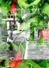 Munich Artists Angelica Zeller Michaelson - girl in water