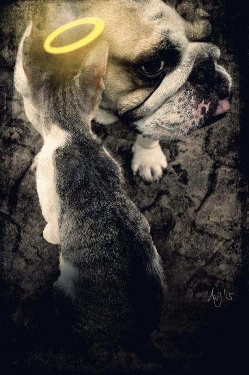 Munich Artists Angela Josupeit - Dog meet Cat