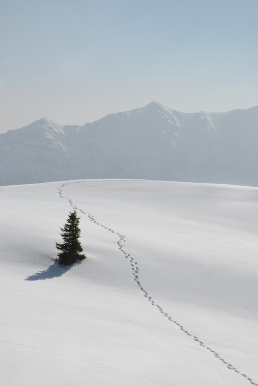 chris tomas -- dort alpine trail in march  digital photopraphy -- 2014 -- 1/10 price on request, depending on size