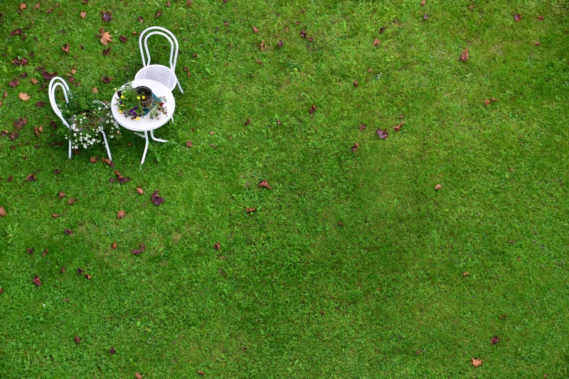 chris tomas -- wiese backyard scene close to the swiss border digital photopraphy -- 2014 -- 1/10 price on request, depending on size