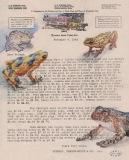 Christopher Crofthttp://christophercroft.com/endangered-animals/