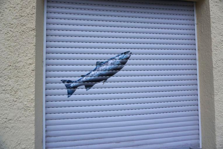fish-in-sendling-closeup